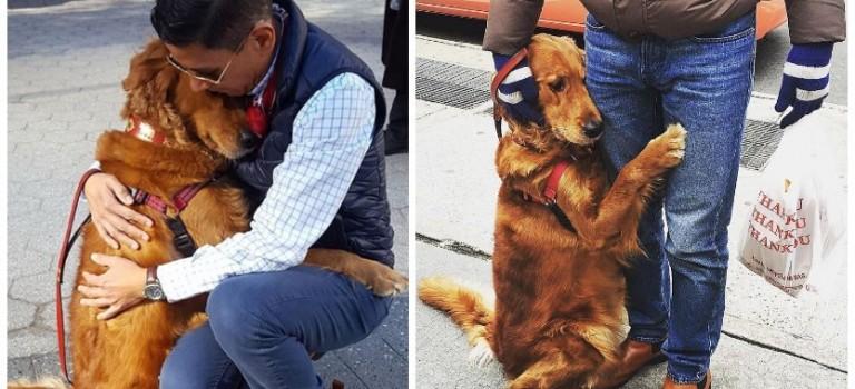 這隻大金毛每天在街頭送上溫暖擁抱,整個紐約都被暖化啦~