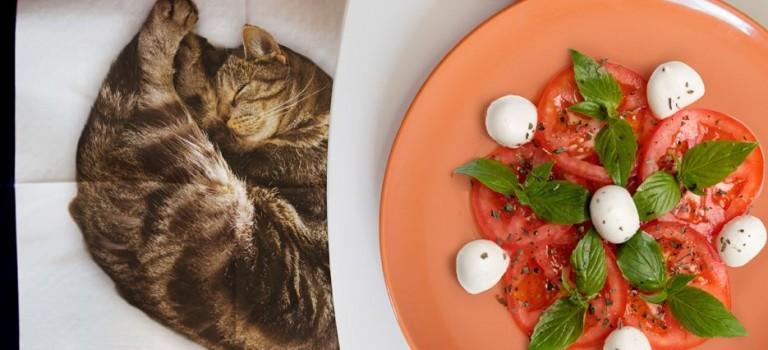 貓奴別看! !讓你大破財的貓咪餐巾來了