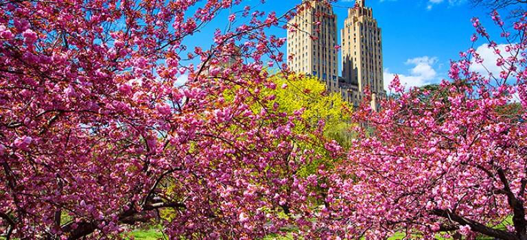 紐約櫻花大爆發! !潮報告訴你5大紐約賞櫻打卡熱點