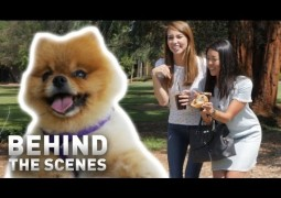 """""""Pet the Dog"""" – Behind the Scenes"""