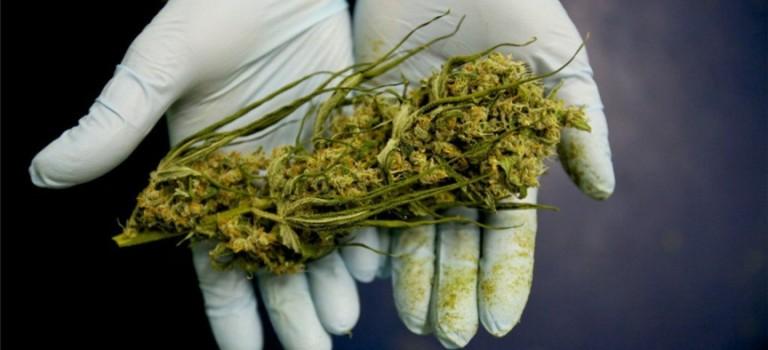 研究表明:大麻真的可以殺死癌細胞?!