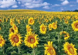 2014_summer_fieldsofgold-690x394