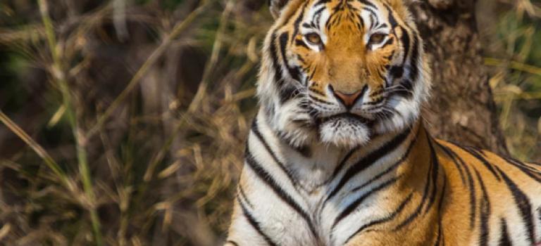 冷知識:老虎的皮毛下竟然是這樣!好神奇!!😱