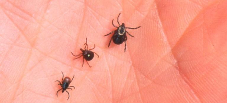 紐約蜱蟲大規模活躍或致嚴重傳染病!出現這些症狀一定要注意!