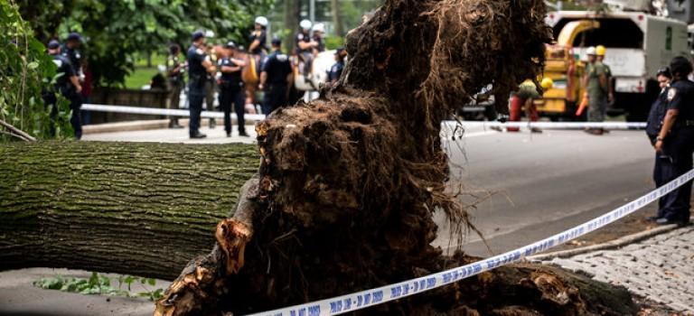 中央公園大樹蹊蹺倒下砸到路人:多人受傷嚴重,其中有兒童