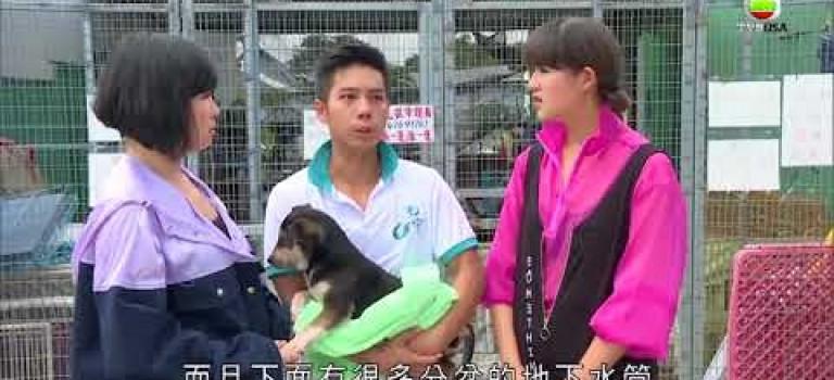 《寵物大聯萌》為救流浪狗可以去到幾盡?