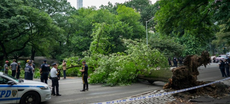 中央公園大樹蹊蹺倒下,被砸母親向紐約市政府索賠 2 億美金!遭遇意外要如何處理?