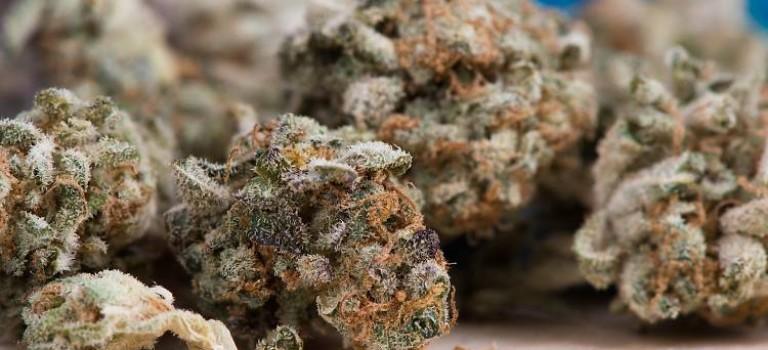 最快明年4月,新澤西娛樂用途大麻也要合法了!!