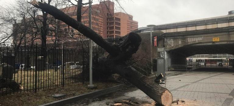 上週炸彈氣旋刮倒紐約大樹!過路學生不幸被砸成重傷