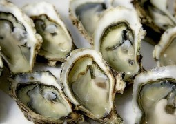 oysters_0