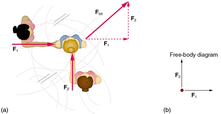 Figure 04_01_01 chapter 4 dynamics force and newton's laws of motion Simple Free Body Diagram at beritabola.co