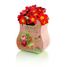 Rose Handbag Planter