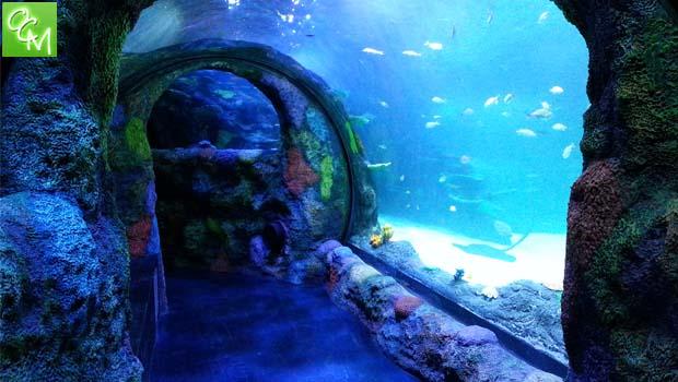 海洋生物水族馆大湖