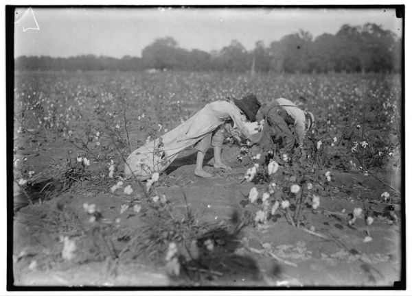 children picking cotton, cotton picking photos, cotton farm