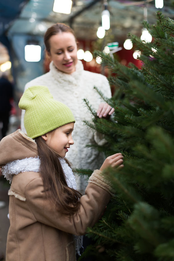 How to Pick a Live Christmas Tree That's Perfect for You