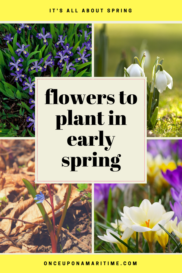 Flowers You Can Plant in Early Spring