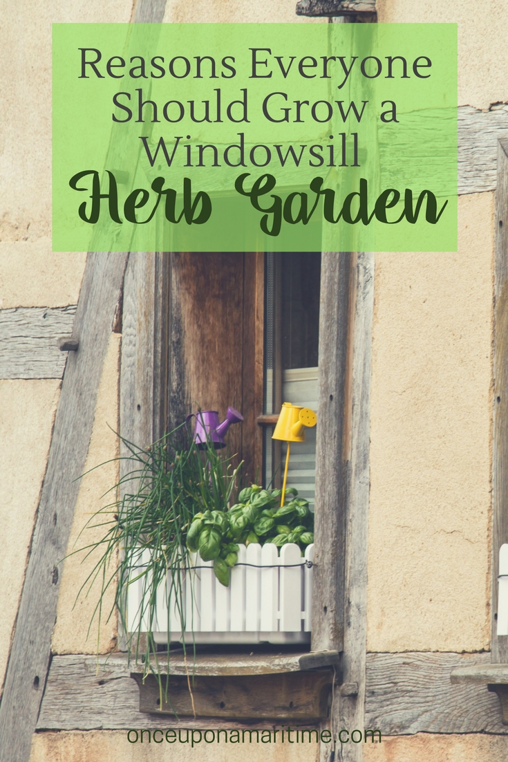 Reasons everyone should grow a windowsill herb garden