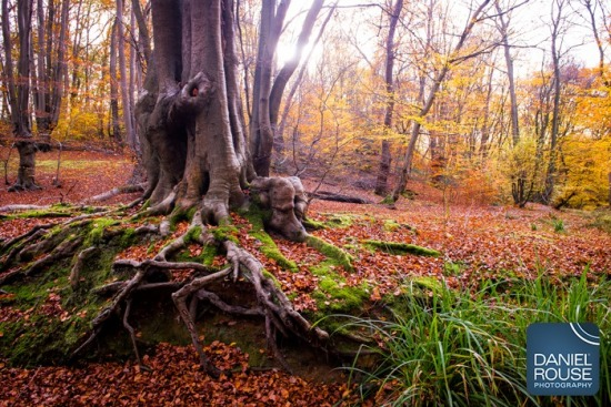 EPPING FOREST - AUTUMN LANDSCAPES