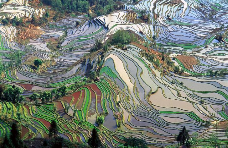 Rice terraces china pollpuma