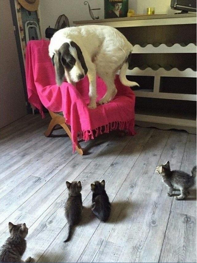 Cat attack pollpuma 04022017