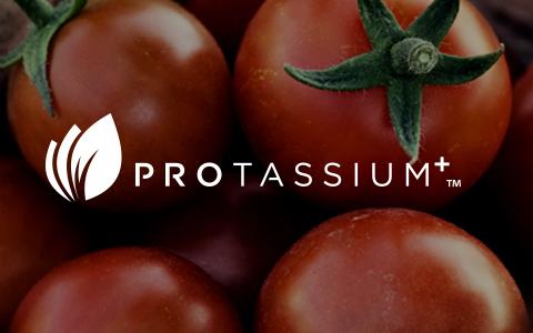 ProtassiumPlus