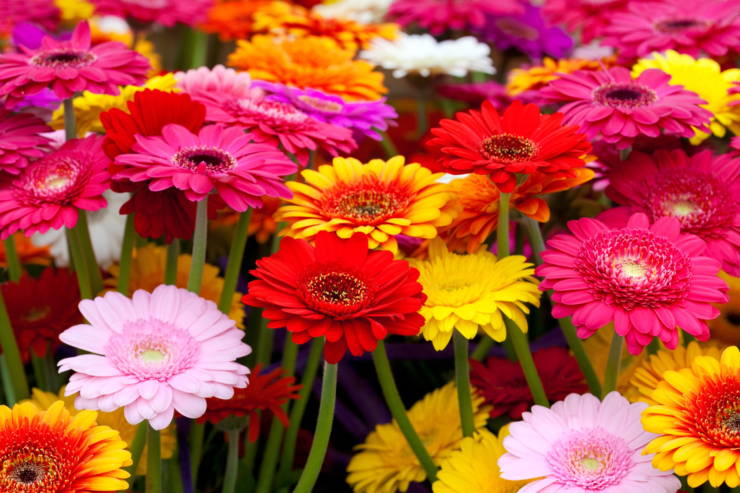 Brighten Up Your Shop with Vibrant Spring Blooms