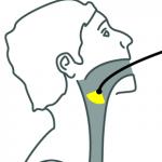 laringoscopia-aparelho