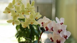 Picture of orchids
