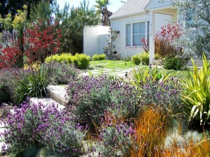 drought resistant garden for your rental properties in west los angeles and south bay