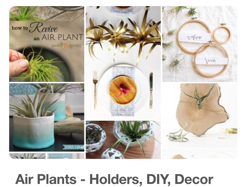 Air Plants Pinterest Board for DIY and Decor