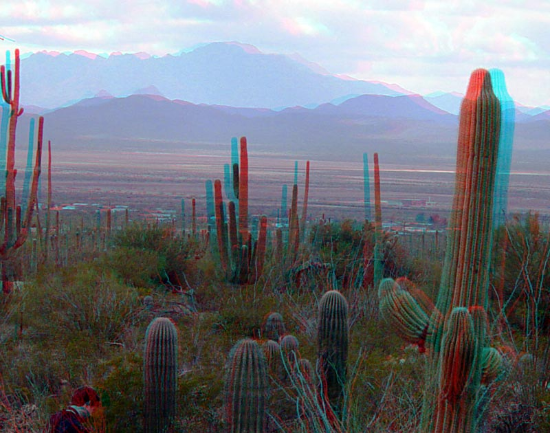 Anaglyph of Saguaro National Park at dusk; Kit Peak in the distance, behind Avra Valley. Numerous cacti present in the foreground.