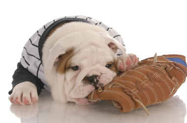 Dog with baseball mitt