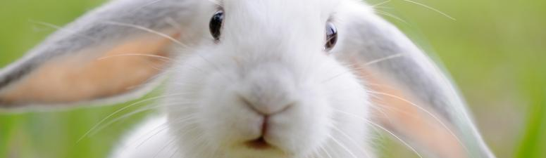 VB The Wise: Of Rabbits and Jackasses