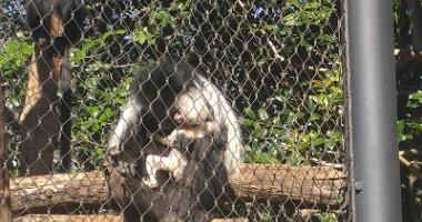 Greenville Zoo Announces First Birth of 2018