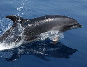 週末一起去灣區看寬吻海豚戲水