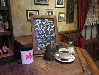 這家瘋狂茶餐廳心血來潮,竟然把老鼠請了進來!!!