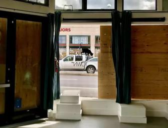奧克蘭貓咪餐廳被入室搶劫,好多喵星人集體逃離
