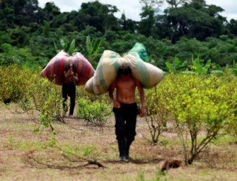哥伦比亚使用新设备打击毒品种植
