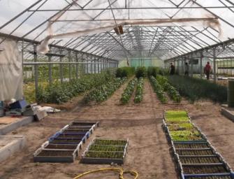 """加州这一路边植物在中国市场爆火,转手能卖500刀引得""""采花贼"""""""