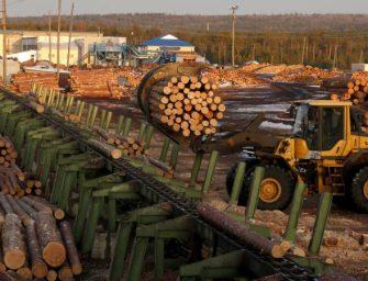 俄罗斯警告中国,不解决非法采伐就会禁止木材出口