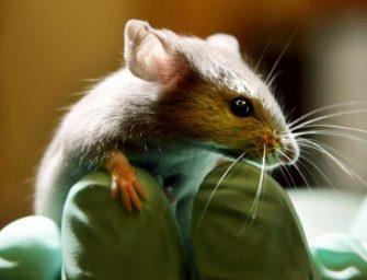 中国惊现鼠疫病患 引发民众恐慌