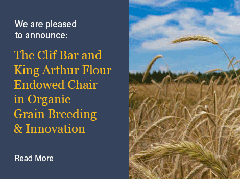 The Clif Bar and King Arthur Flour Endowed Chair in Organic Grain Breeding & Innovation