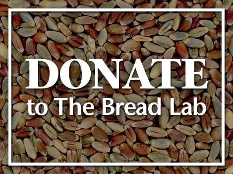 Donate to The Bread Lab