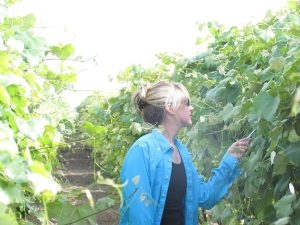 Scientist examines grapevine in vineyard.