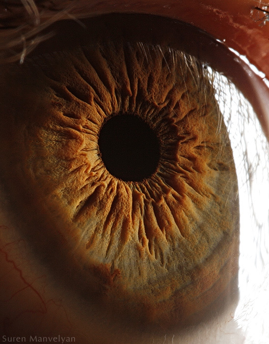 These 13 Fascinating Close-Ups Of The Human Eye Will Mesmerize You