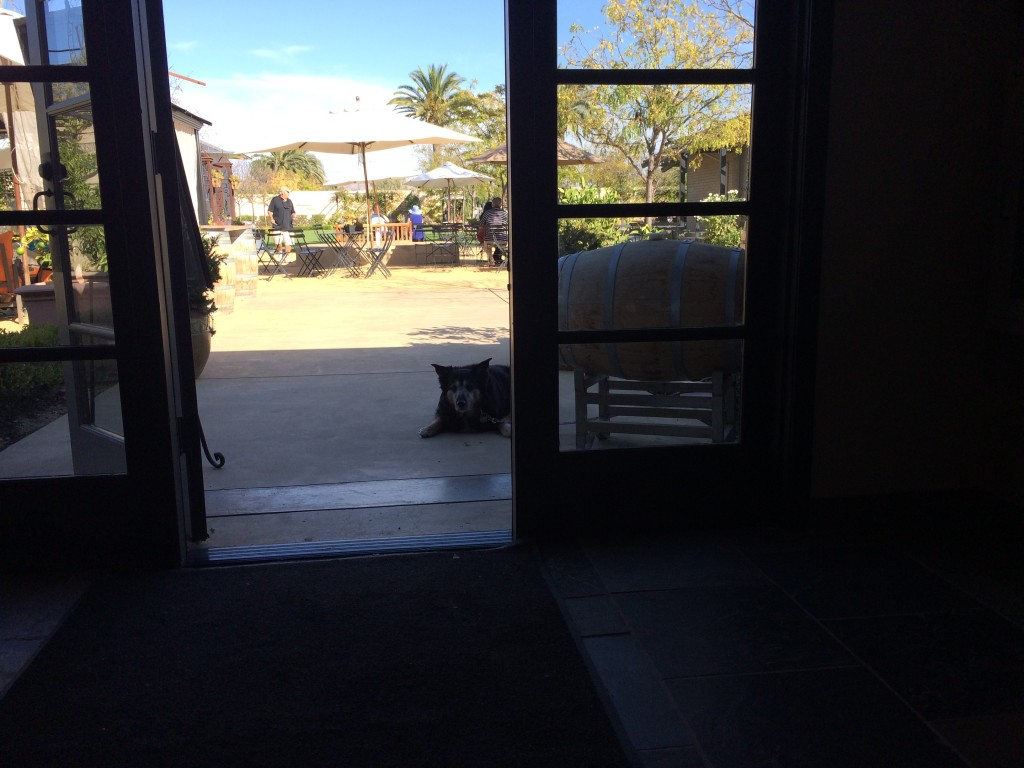Porter hanging in the shade waiting for the winos