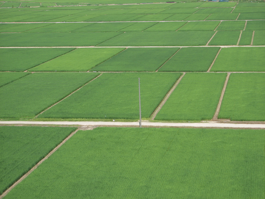 Niigata Green