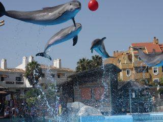 Amusement Park,Malaga