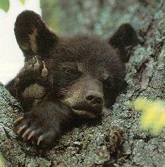 Tom's Bear Cub