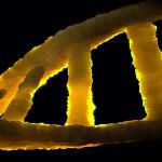 Oncofoco usa inteligência artificial para tratamento de câncer